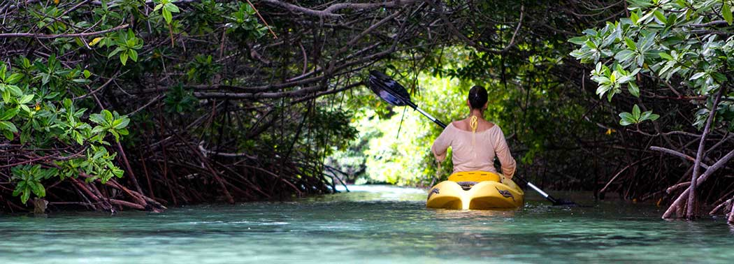 masthead_mangroveforest